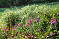 September Blooming Plants (241)