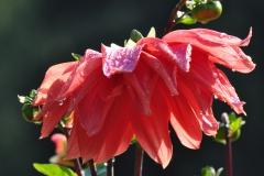 September Blooming Plants (282)