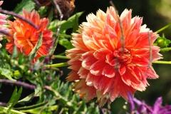 September Blooming Plants (289)