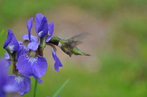 Gardens: Tips, Tricks, and To-Do's