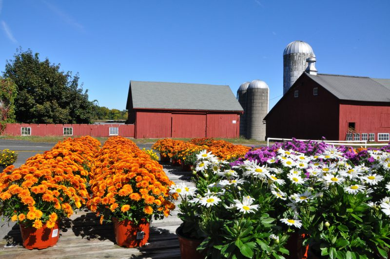 Tulmeadow Farm - great place to get flowers in West Simsbury