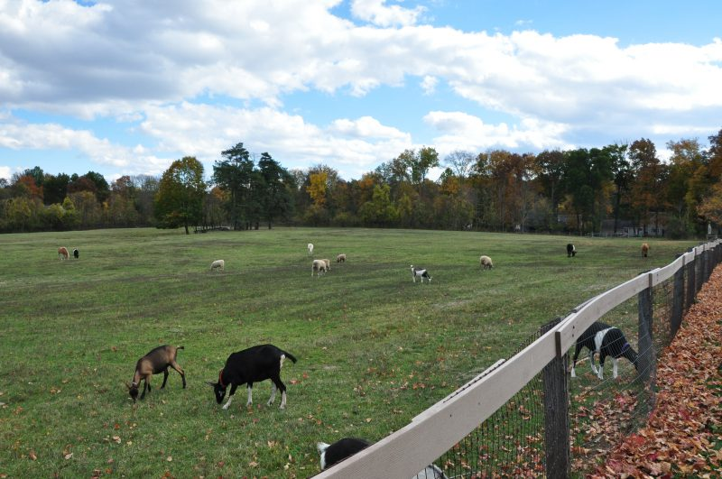 Animals, Westmoor Park, West Hartford CT, realtor, Real estate