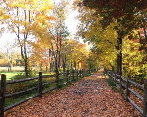Cycling on Farmington Valley Rail Trails-farminton-valle