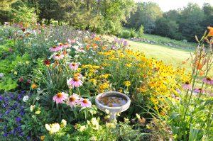 Fall Gardening to do list