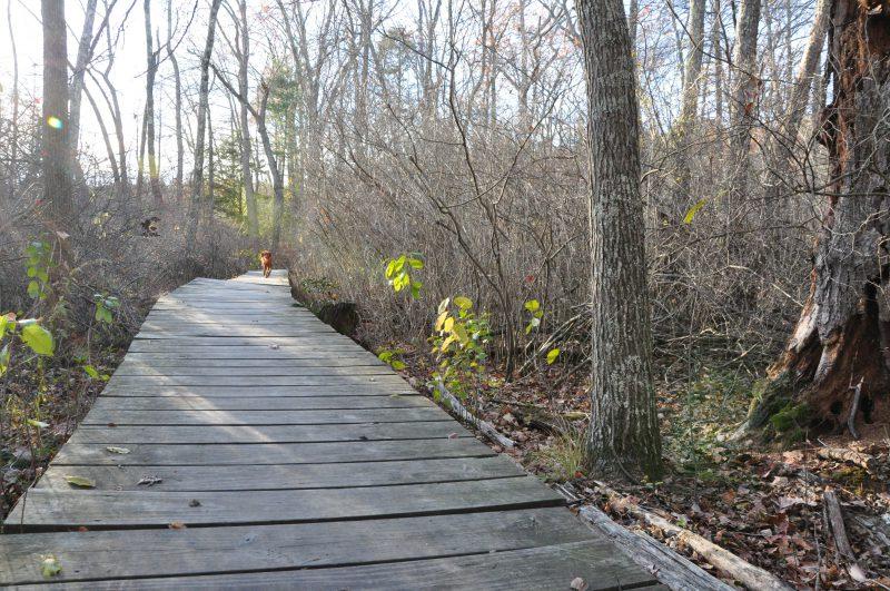 Hiking-great-pond-simsbury-ct