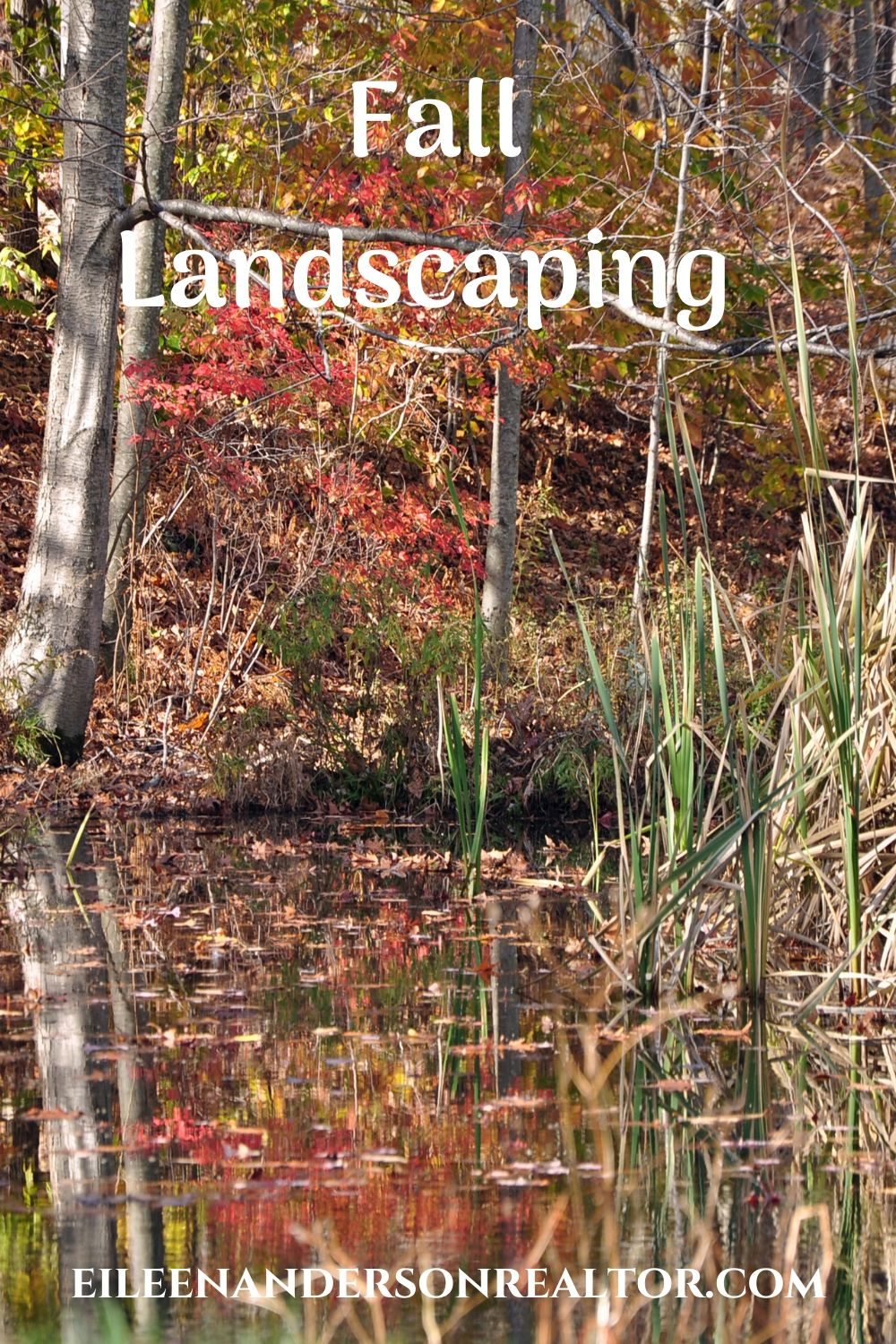 fall landscaping-trees-shrubs