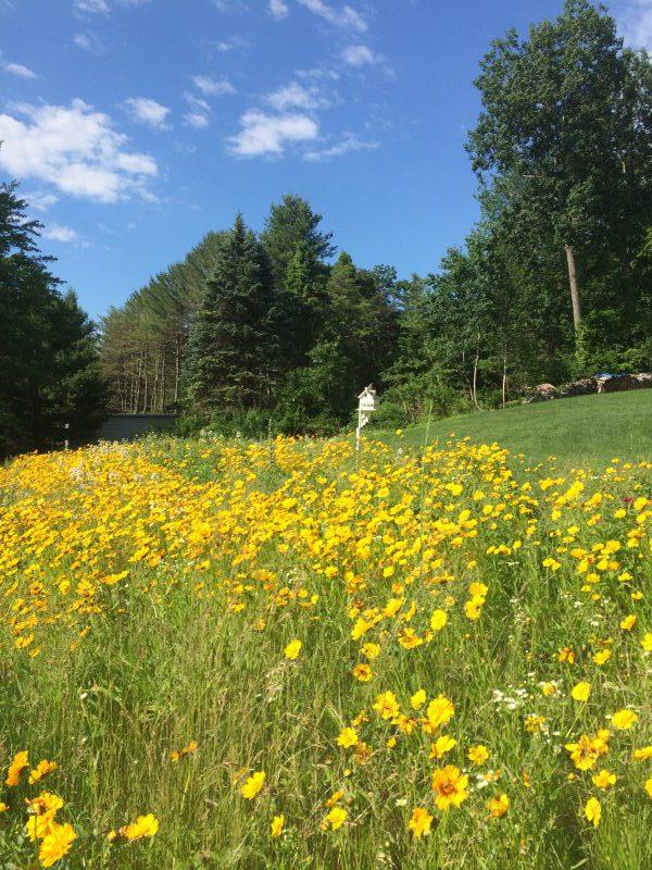 Wildflower Meadows of Simsbury, CT