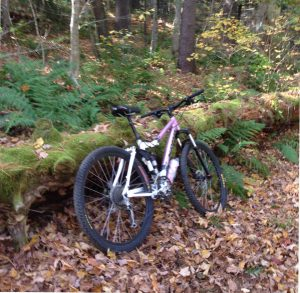 Mountain Biking Litchfield
