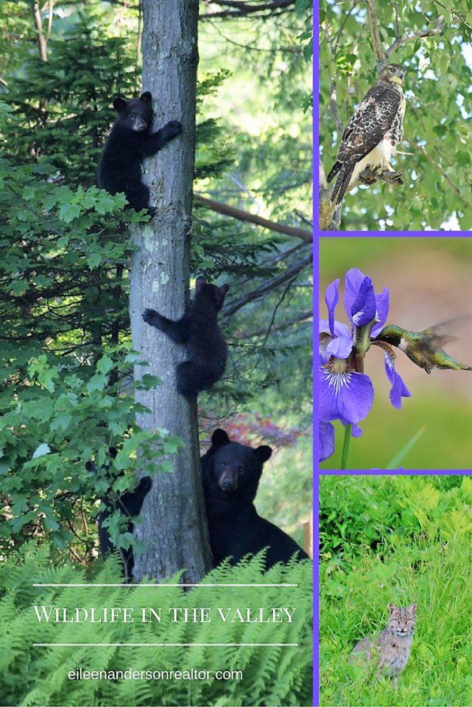 Wildlife in Simsbury, CT