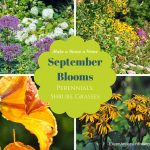 September Blooming plants, shrubs, perennials,vines, annuals