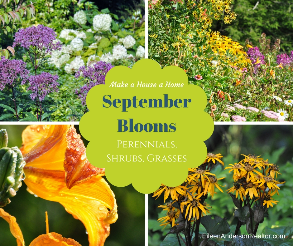 September Blooming plants, shrubs, perennials,vines, annuals