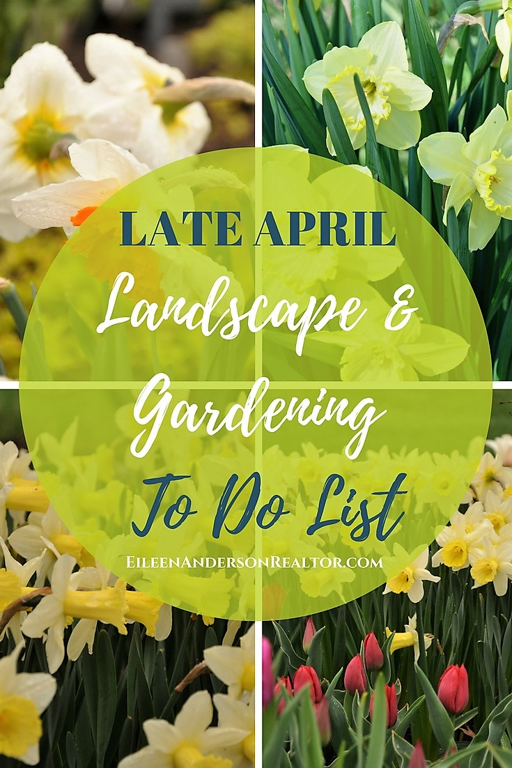Check out the next article for Late April Gardening!