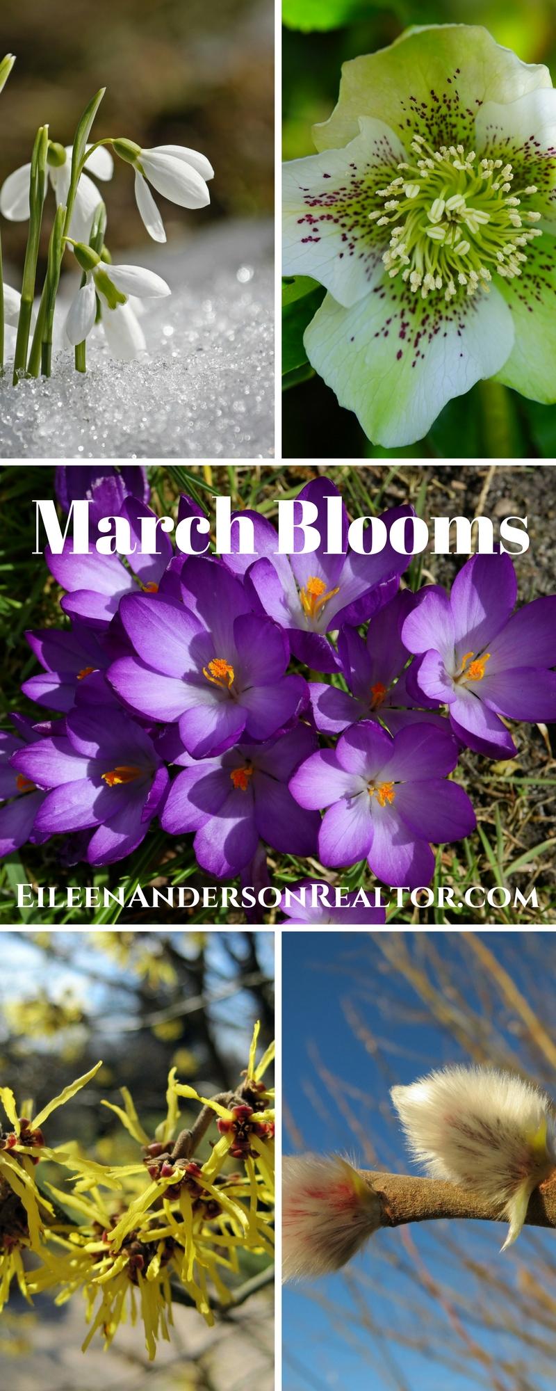 spring-garden-ideas-march-booms