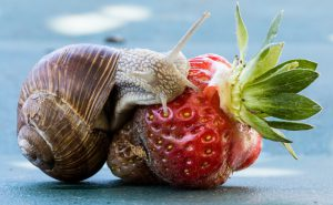 Control the slugs-snails eating your strawberries with beer! Late April Gardening Checklist