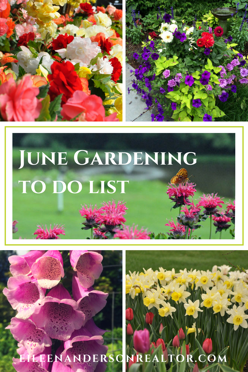 June landscaping and Gardening Checklist . Home Improvement, DIY, Landscape Design, Gardening Tips, June Gardening to do List, Home Staging, Outdoor Living, Real Estate, Shade Gardens, Lawn maintenance. #gardening #realestate
