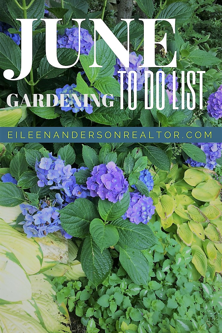 June Landscaping and Gardening Checklist, June Gardening to do List. Home Improvement, DIY, Landscape Design, Gardening Tips, June Gardening to do List, Home Staging, Outdoor Living, Real Estate, Shade Gardens, Lawn maintenance. #gardening #realestate