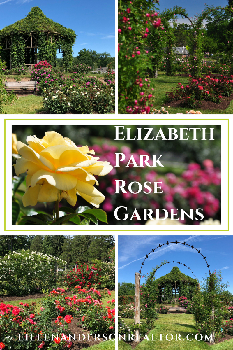 Realtor West Hartford, Historic Gardens, Things to do Connecticut, Rose Gardening, Elizabeth Park, Rose Gardens, Gardening, things to do West Hartford, landscape design, Real estate West Hartford, Historic Sites