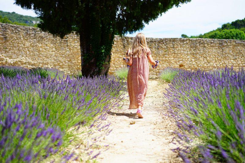 Lavender july gardening checklist