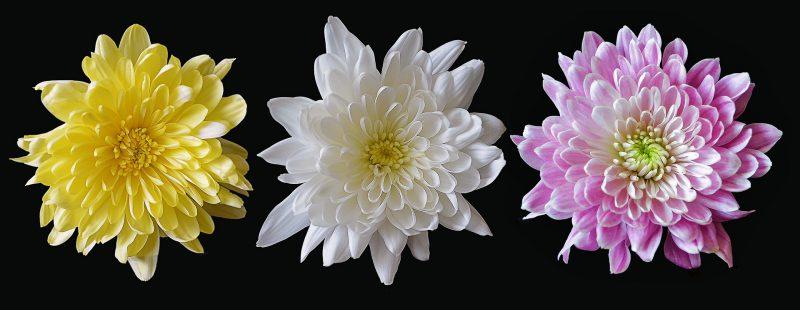 flowers july gardening checklist