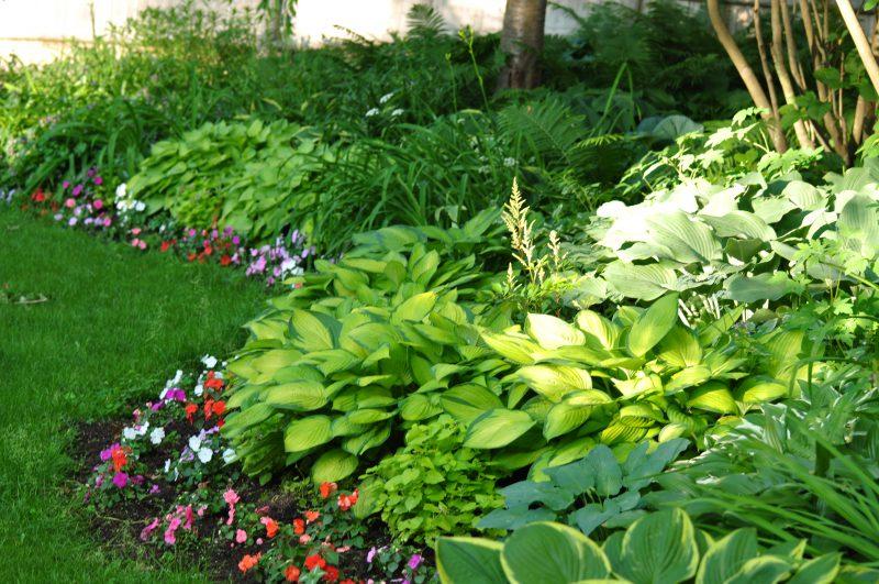 shade garden july gardening checklist