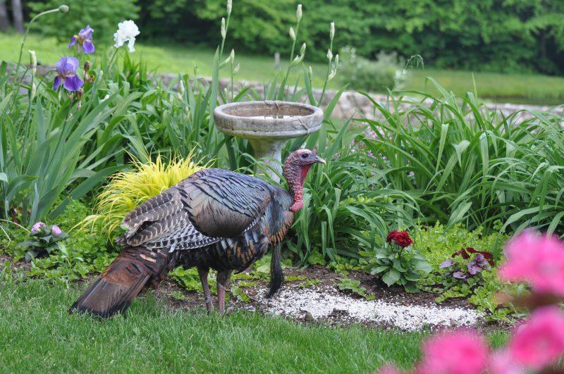 july-gardening-checklist-bird-bath