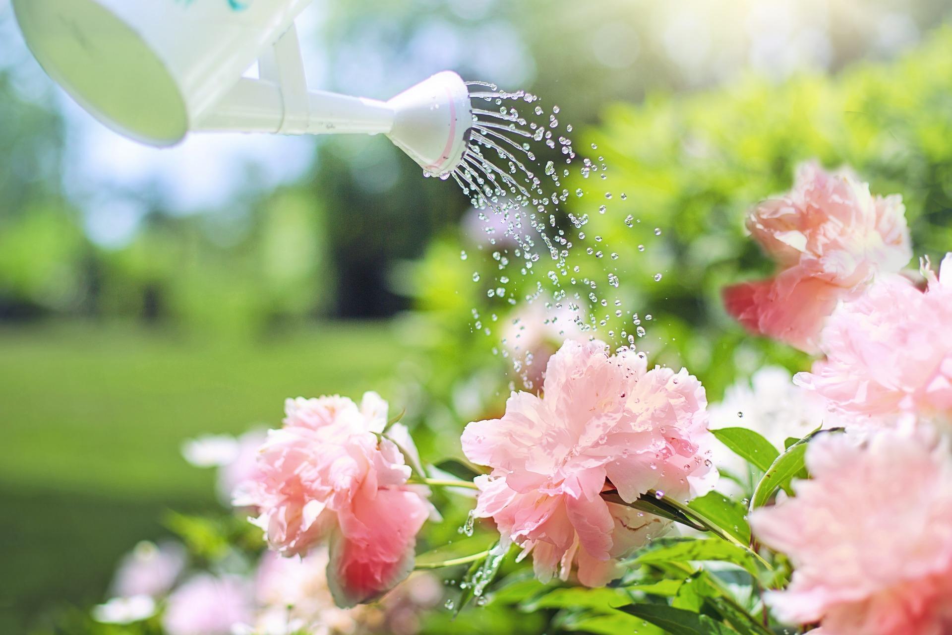 watering-peony-july-gardening-checklist