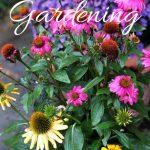 fall-gardening-checklist-asters. realtor simsbury, gardens simsbury, fall gardening, home improvement, diy, outdoor living, real estate
