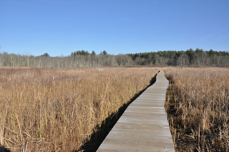 White-Memorial-Boardwalk-Hike-Litchfield-CT