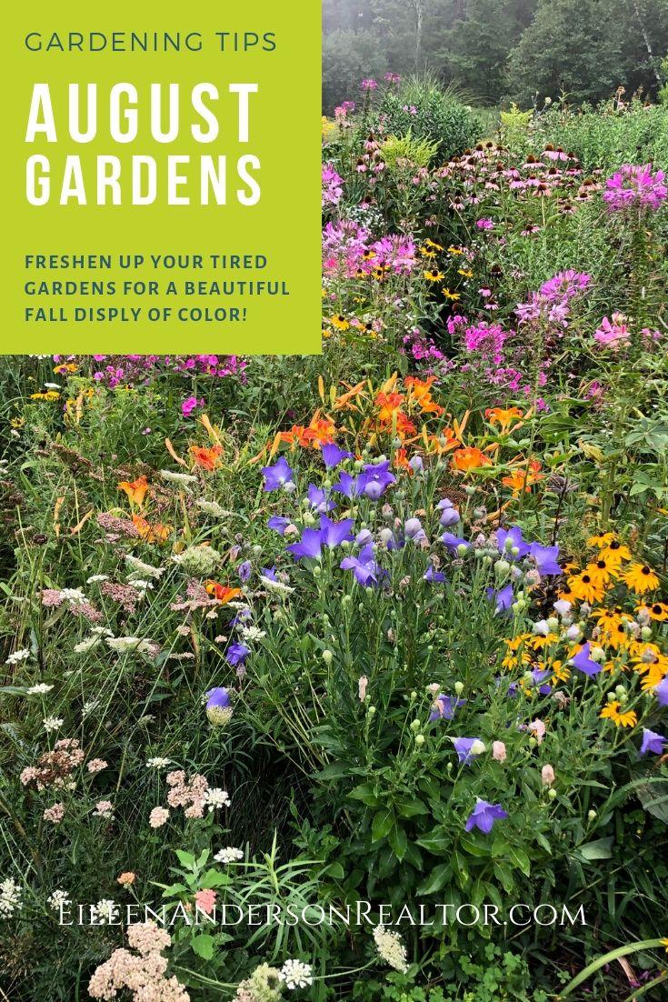 august gardening to do list