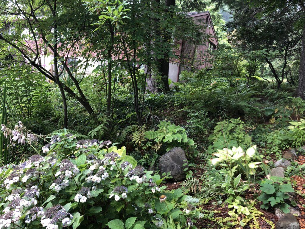 woodland shade gardens