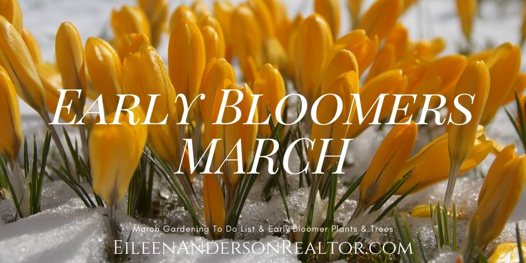 Early Bloomers MARCH