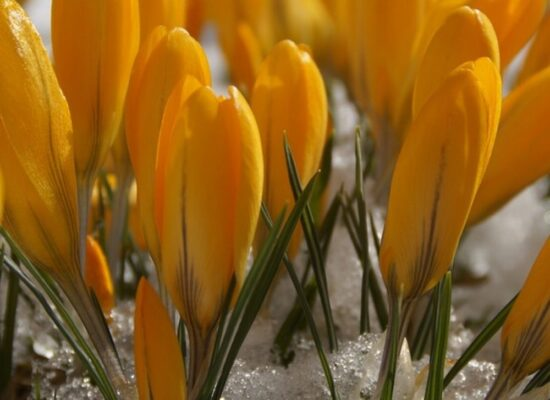 Early Bloomers and March Gardening To Do Lists