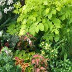 Part shade perennial gardens that bloom all summer.