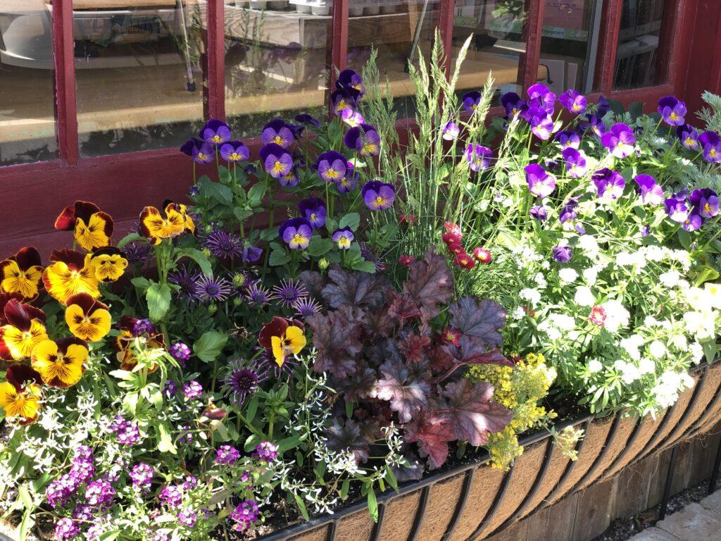 window box ideas flowers
