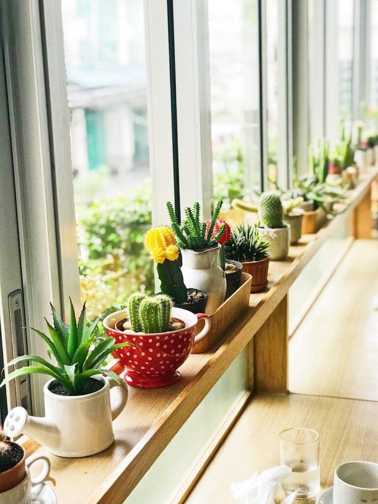 indoor container plants